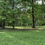 Konecki park - maj 2020 zdjęcie nr 43