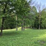 Konecki park - maj 2020 zdjęcie nr 44