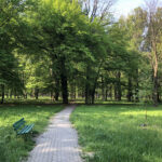 Konecki park - maj 2020 zdjęcie nr 45