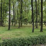 Konecki park - maj 2020 zdjęcie nr 50