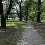 Konecki park - maj 2020 zdjęcie nr 9
